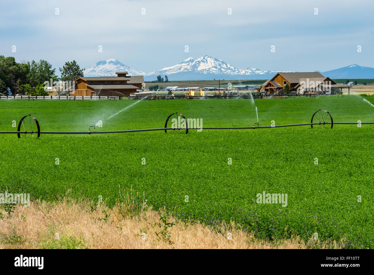 Field of green alfalfa in eastern Oregon being irrigated - Stock Image