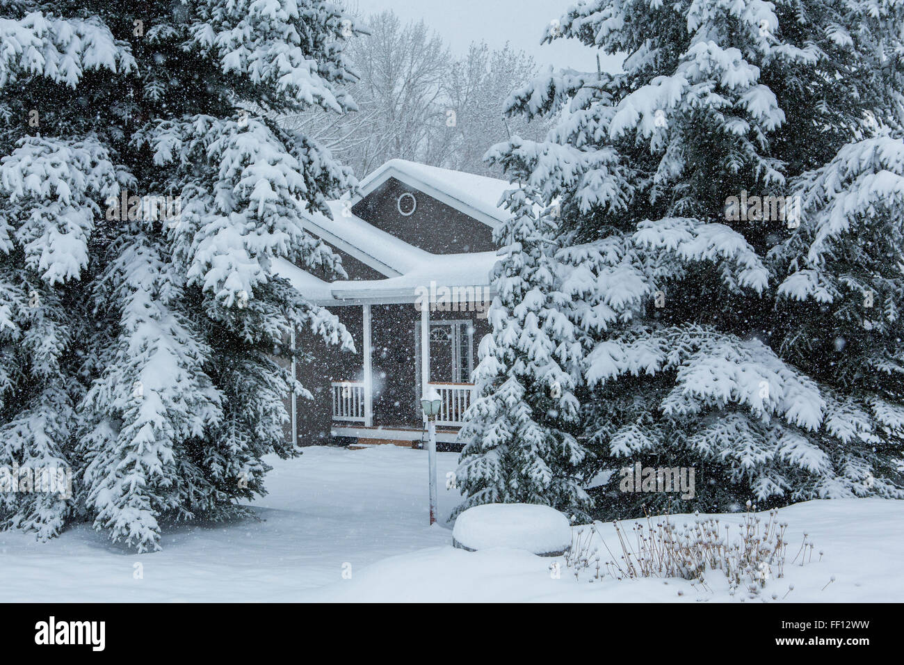 House and trees in snowy front yard Stock Photo