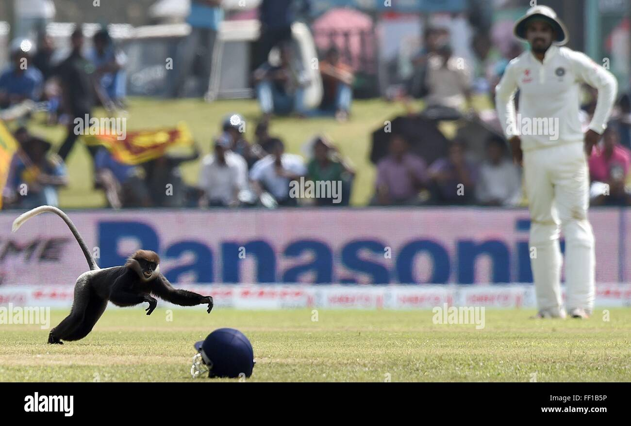Beijing, China. 10th Feb, 2016. A monkey rushes into a field during a cricket game in Sri Lanka, Aug. 14, 2015. - Stock Image