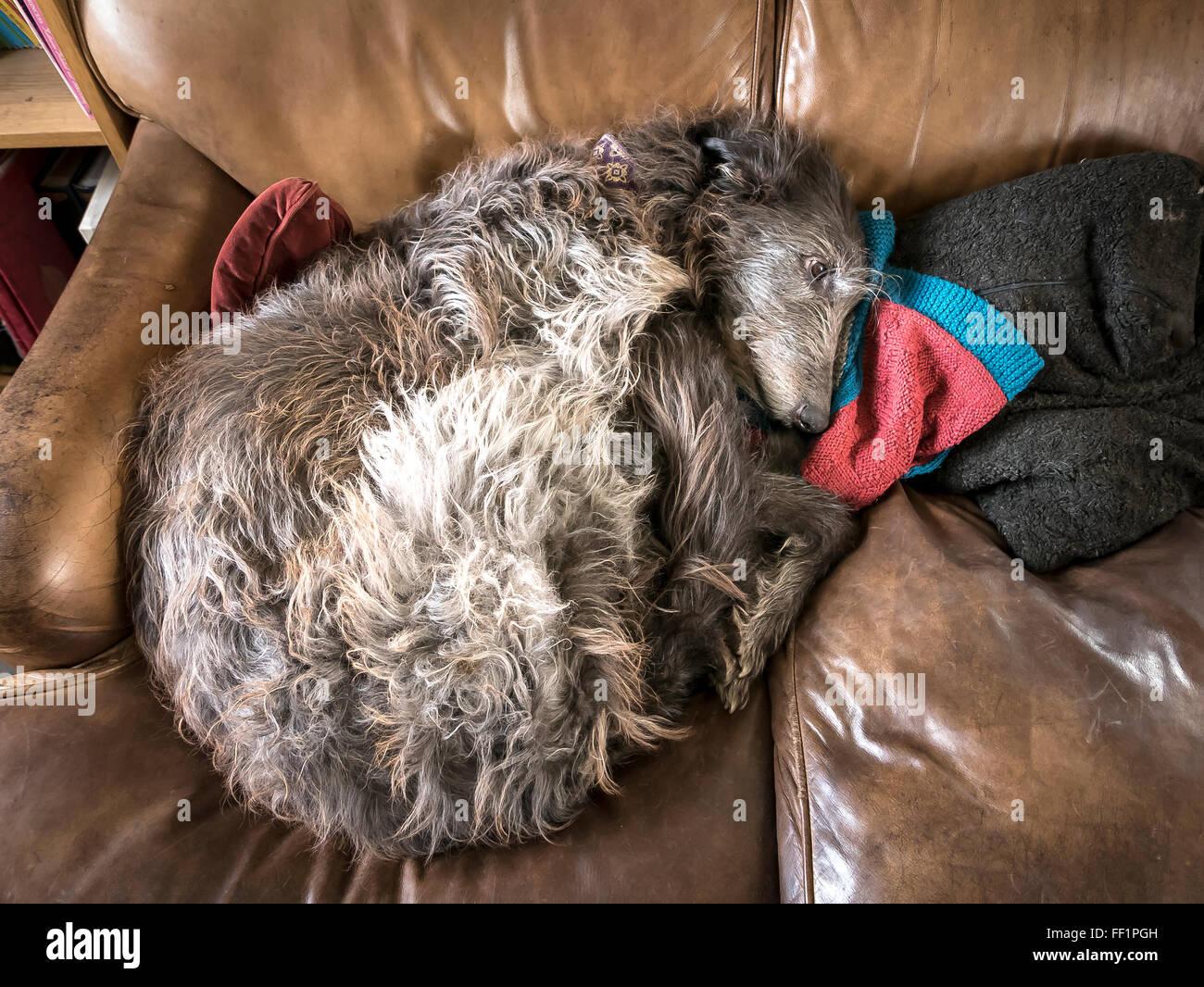 A frail elderly on a sofa - Stock Image