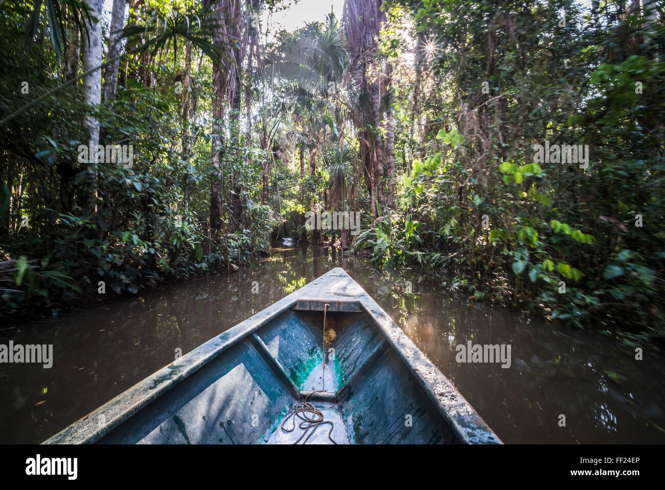 Canoe boat trip in Amazon JungRMe of Peru, by SandovaRM RMake in Tambopata NationaRM Reserve, Peru, South America - Stock Image