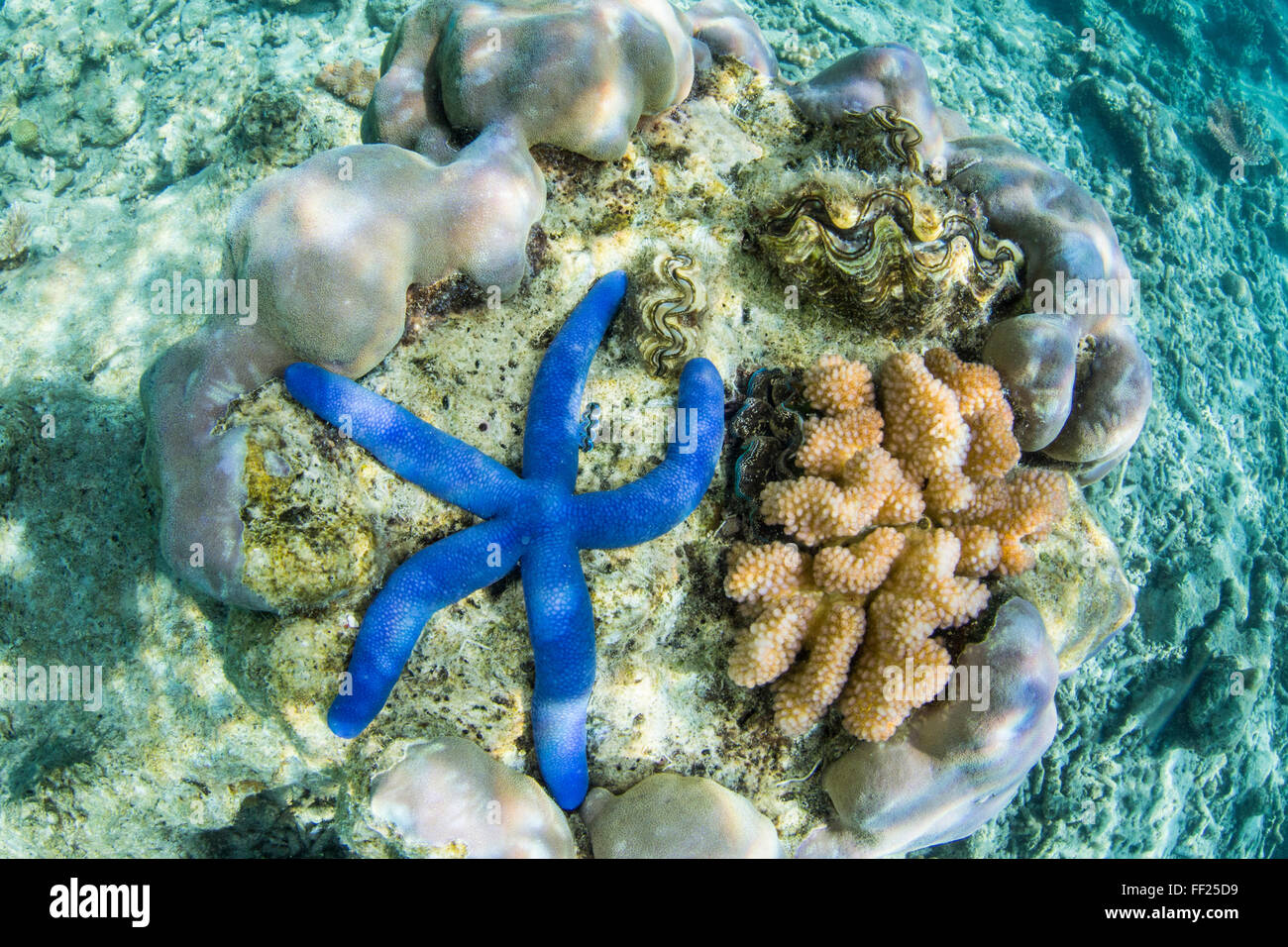 Underwater view of the reef on Pulau Lintang Island, Anambas Archipelago, Indonesia, Southeast Asia, Asia - Stock Image