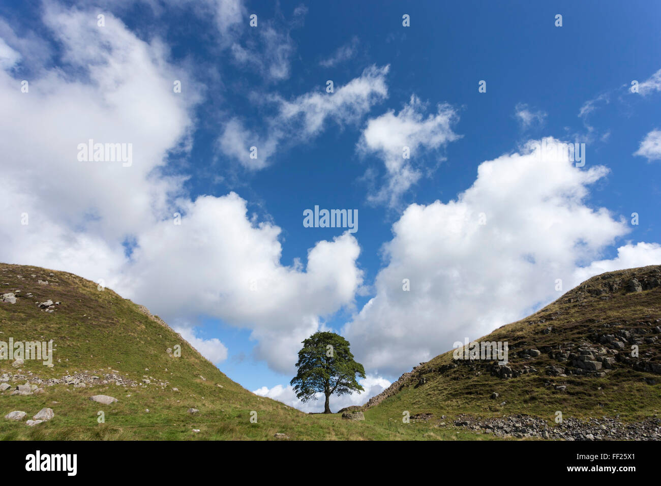 Sycamore gap, Hadrian's WaRMRM, UNESCO WorRMd Heritage Site, NorthumberRMand, EngRMand, United Kingdom, Europe - Stock Image