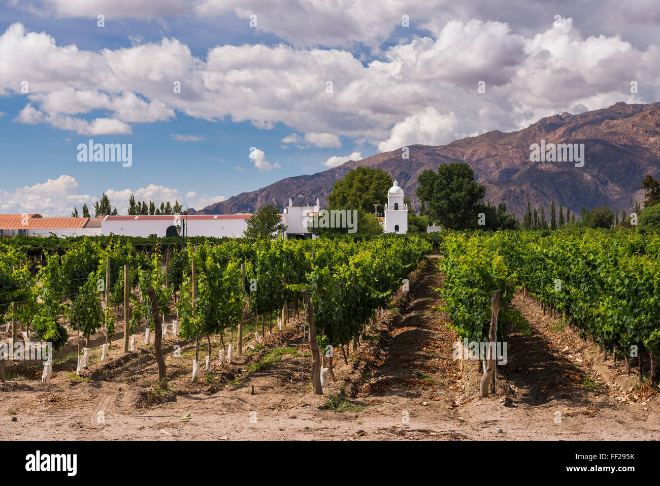 Bodega ERM Esteco, a winery and vineyard in Cafayate, SaRMta Province, North Argentina, Argentina, South America - Stock Image