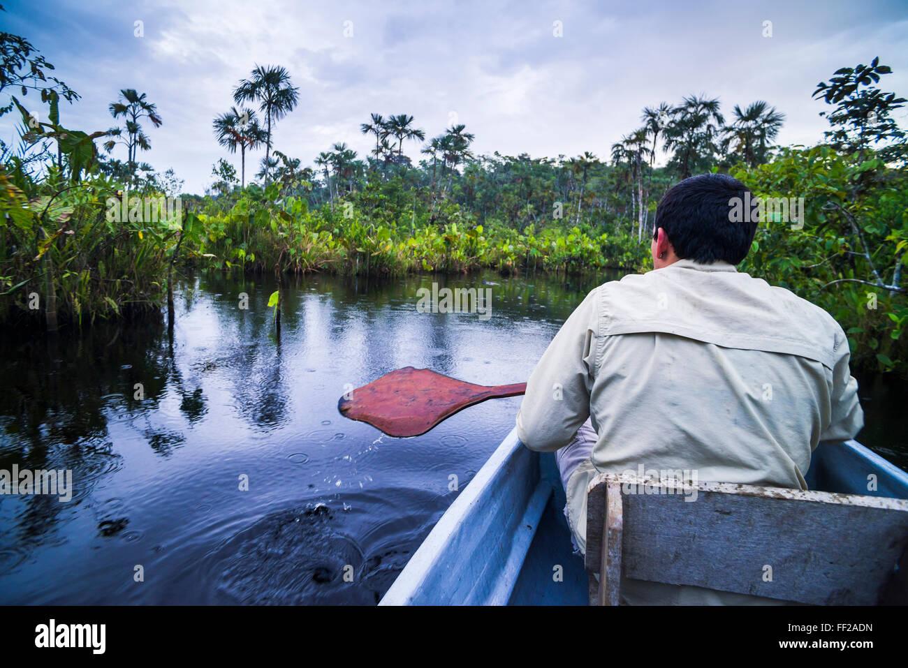 Dugout canoe boat ride in narrow waterway, Amazon Rainforest, Coca, Ecuador, South America - Stock Image