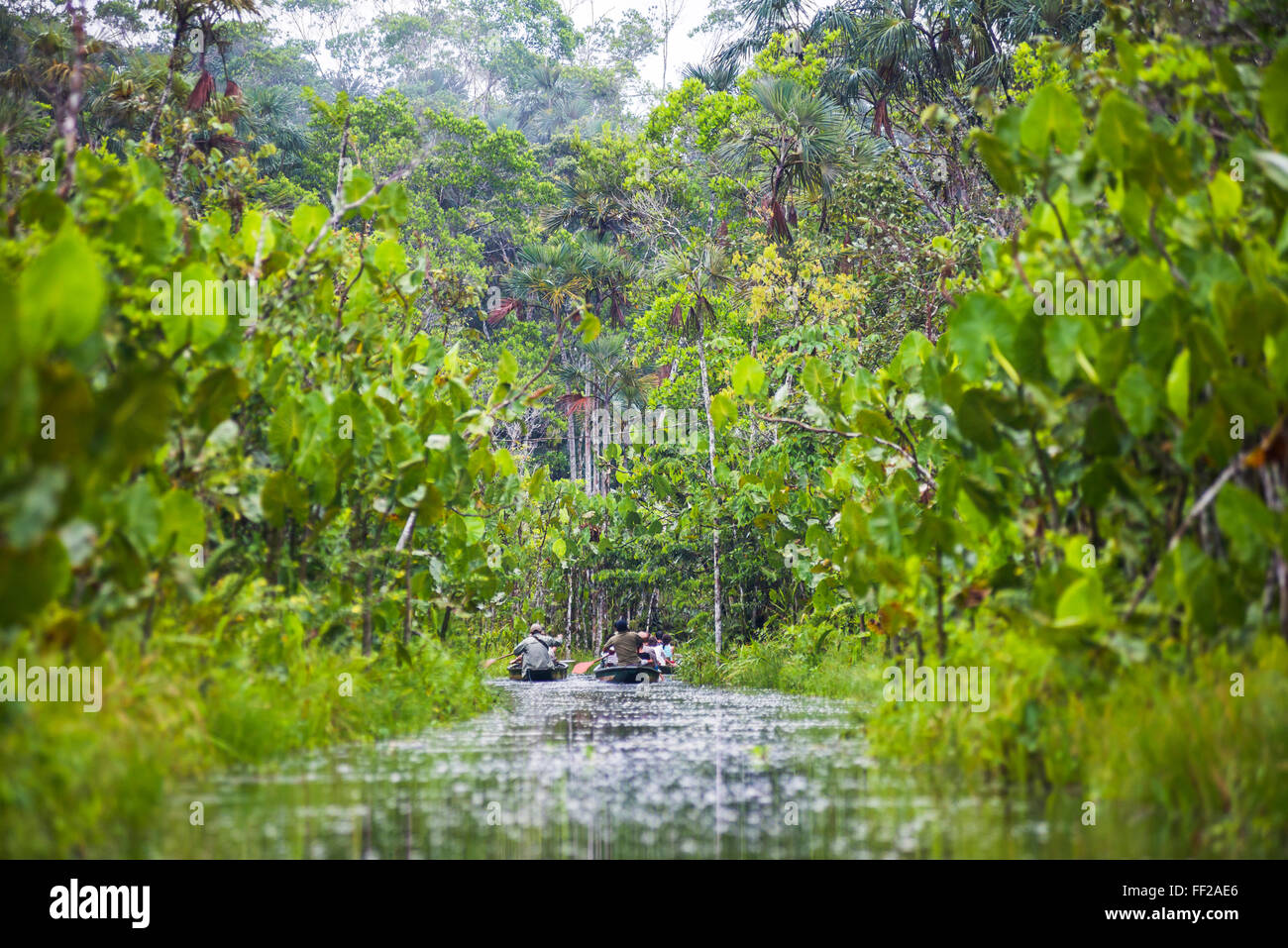 Amazon Rainforest dugout canoe ride, Sacha RModge, Coca, Ecuador, South America - Stock Image