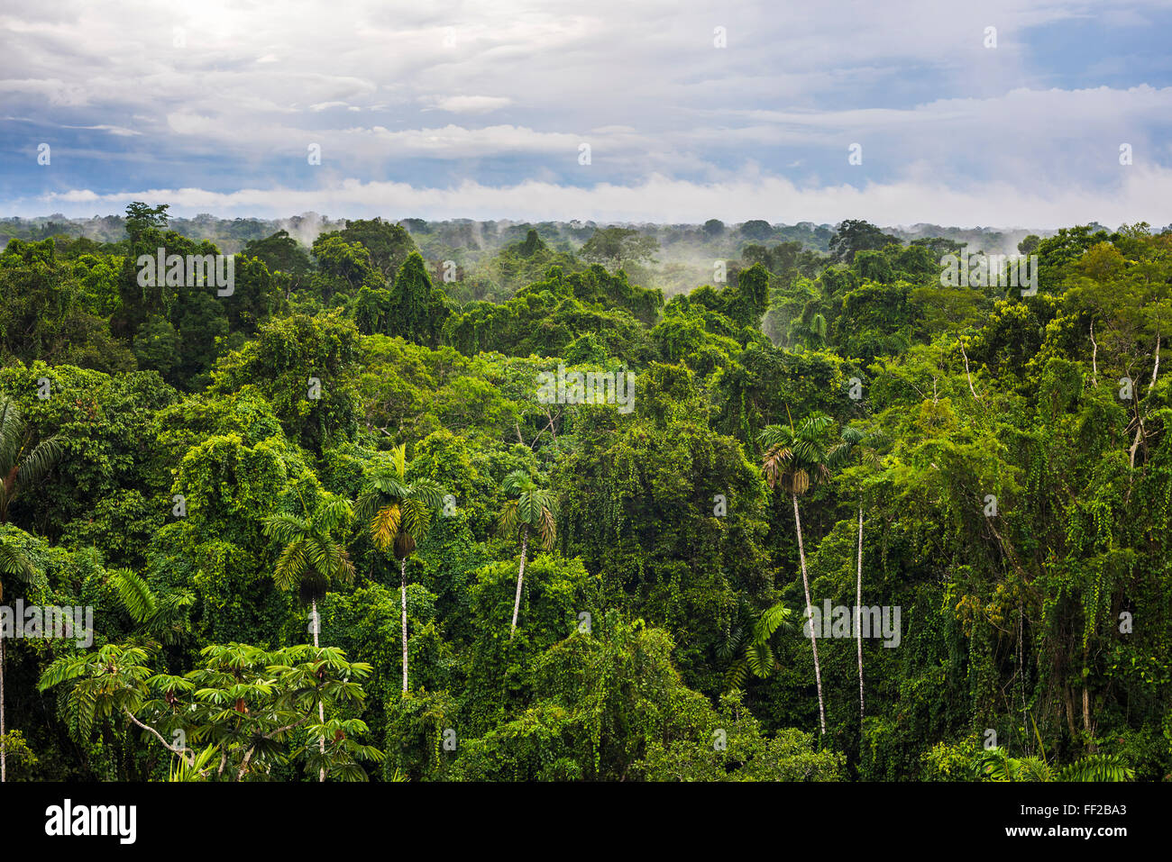 Amazon Rainforest at Sacha RModge, Coca, Ecuador, South America - Stock Image