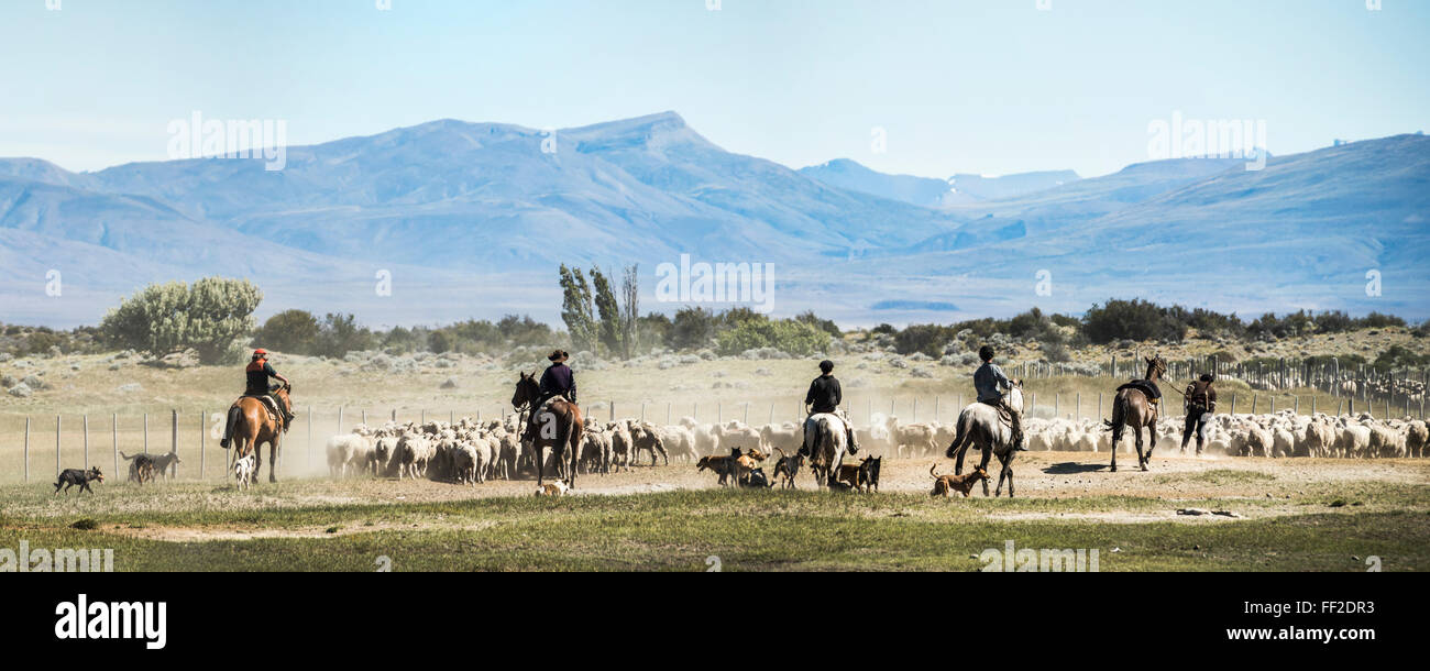Gauchos riding horses to round up sheep, ERM ChaRMten, Patagonia, Argentina, South America - Stock Image