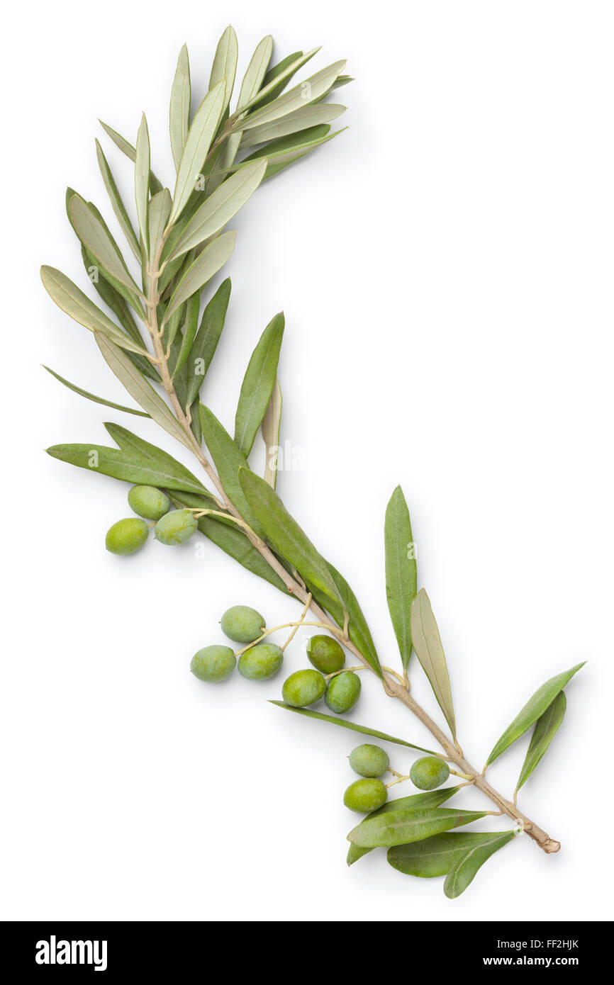 Fresh olive twig and olives on white background - Stock Image