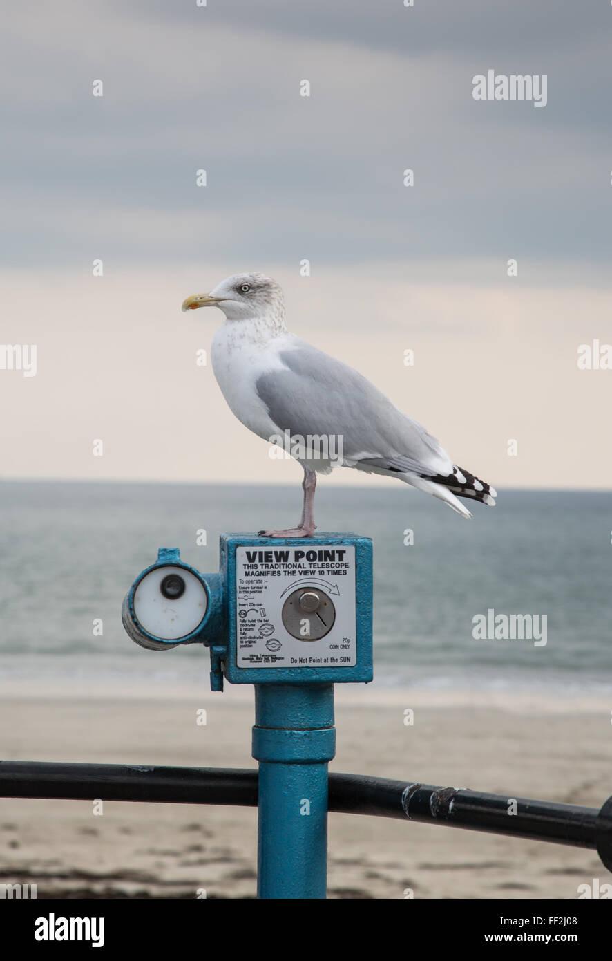Seagull resting on top of promenade telescope - Stock Image