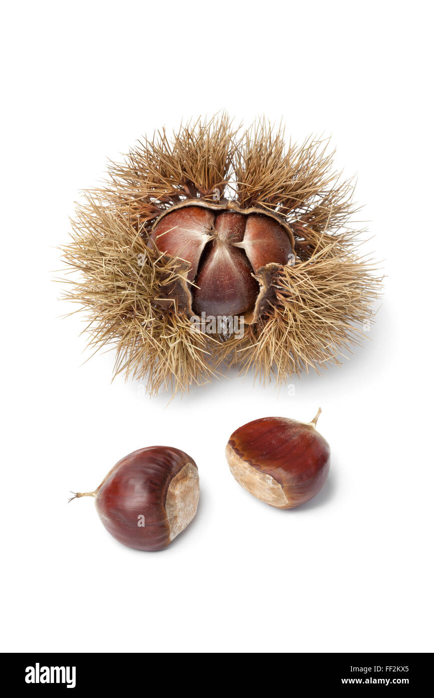 Sweet chestnut in spiked pod on white background - Stock Image