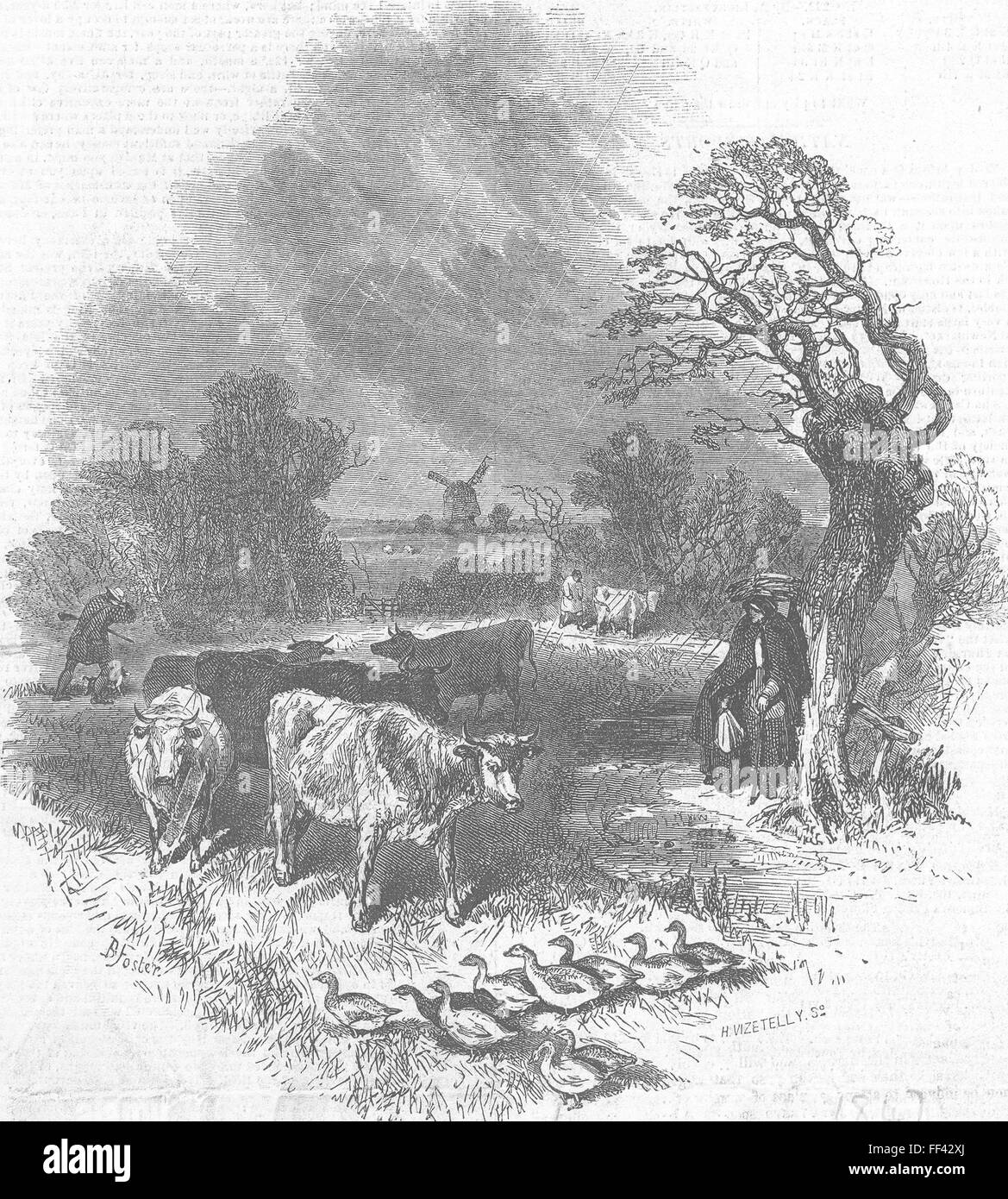 COWS {Caption cut off} 1847. Illustrated London News - Stock Image