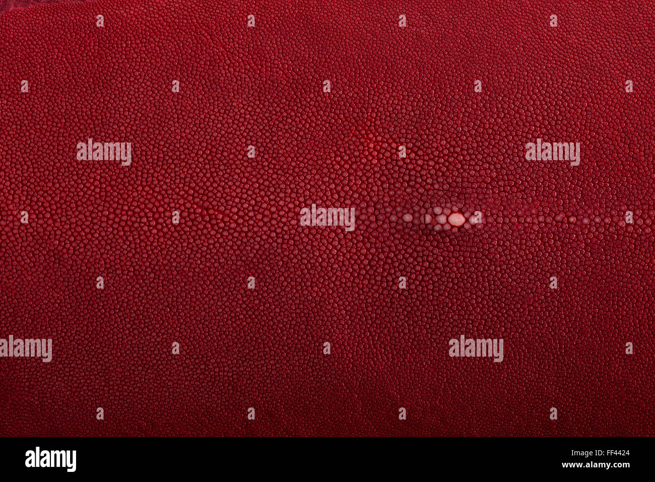 Stingray exotic fish leather, hide, skin in red color Stock Photo ...