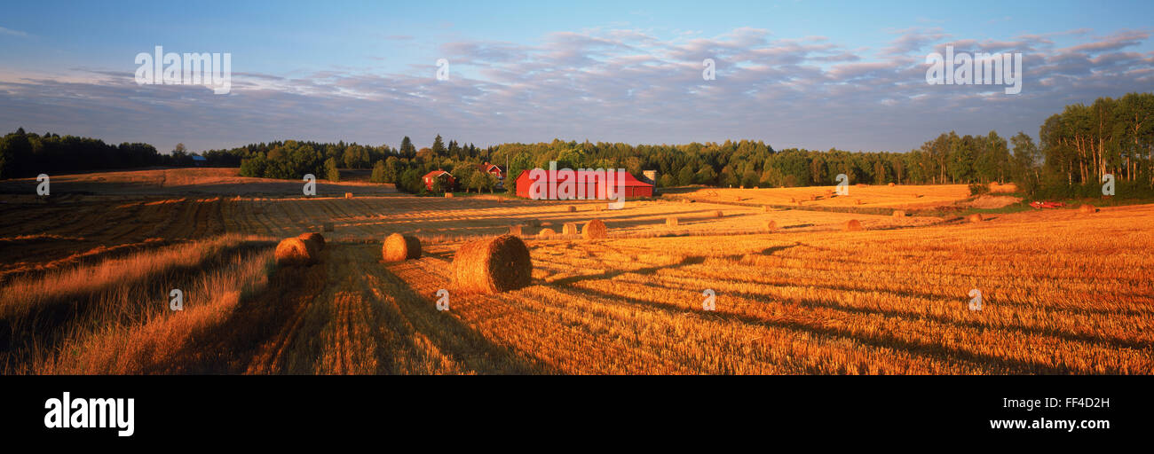Panoramic photos of sunset light across field of cut and rolled hay near Flens in Sweden - Stock Image