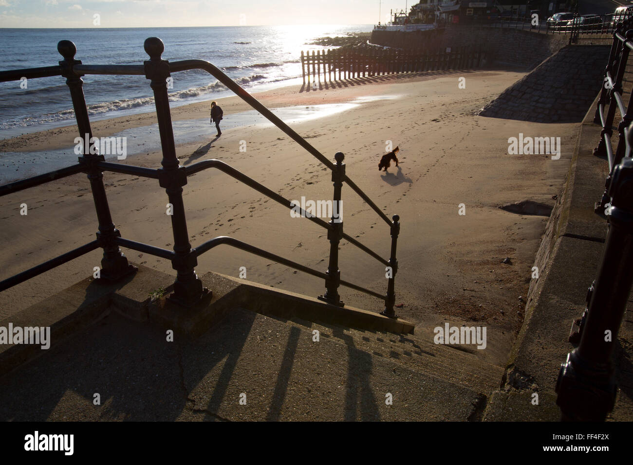 Isle of Wight, UK. 10th February, 2016. UK Weather, dog walking on the beach, late afternoon sunshine, Ventnor, - Stock Image