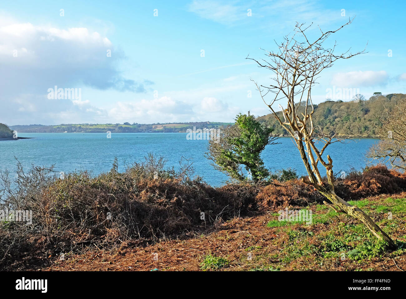 Looking out towards the Carrick Roads on the River Fal in Cornwall, England, UK - Stock Image