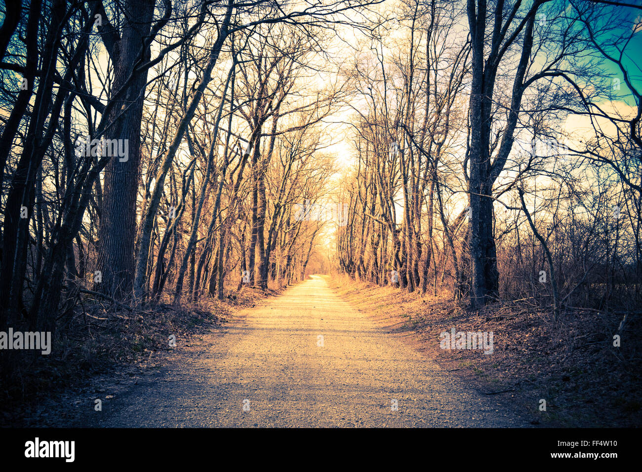 Tree-lined gravel country road. Vintage, retro look. Direction or path concept. - Stock Image