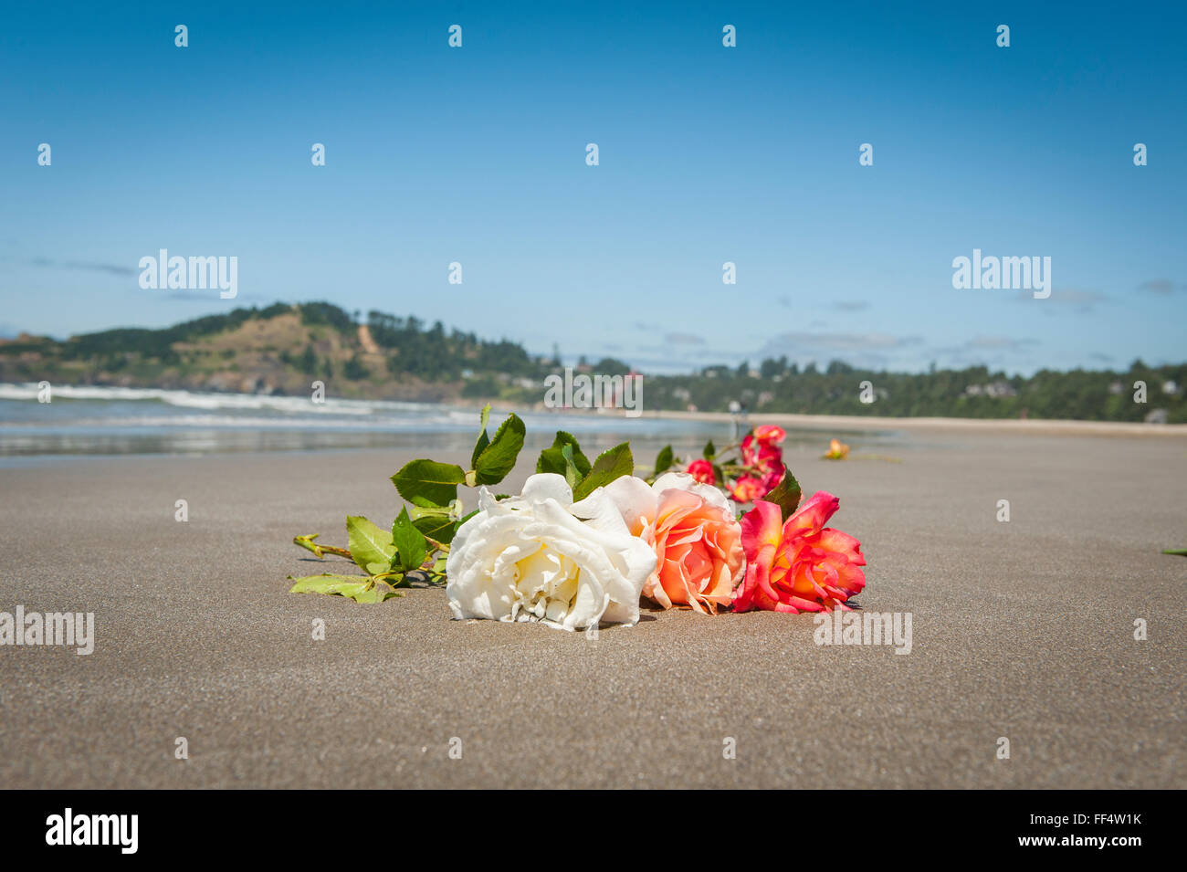 Oregonians place boquets of roses on the Pacific beach memorializing the lives of the victims of the 2011 Japanese - Stock Image