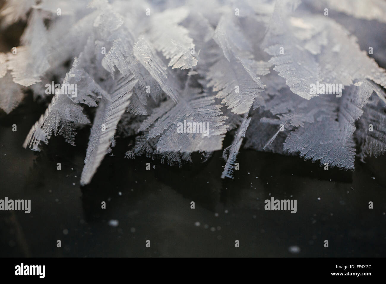 Hoar frost forms feather-like crystals on the ice surface of Patricia Lake in Jasper National Park early in the - Stock Image