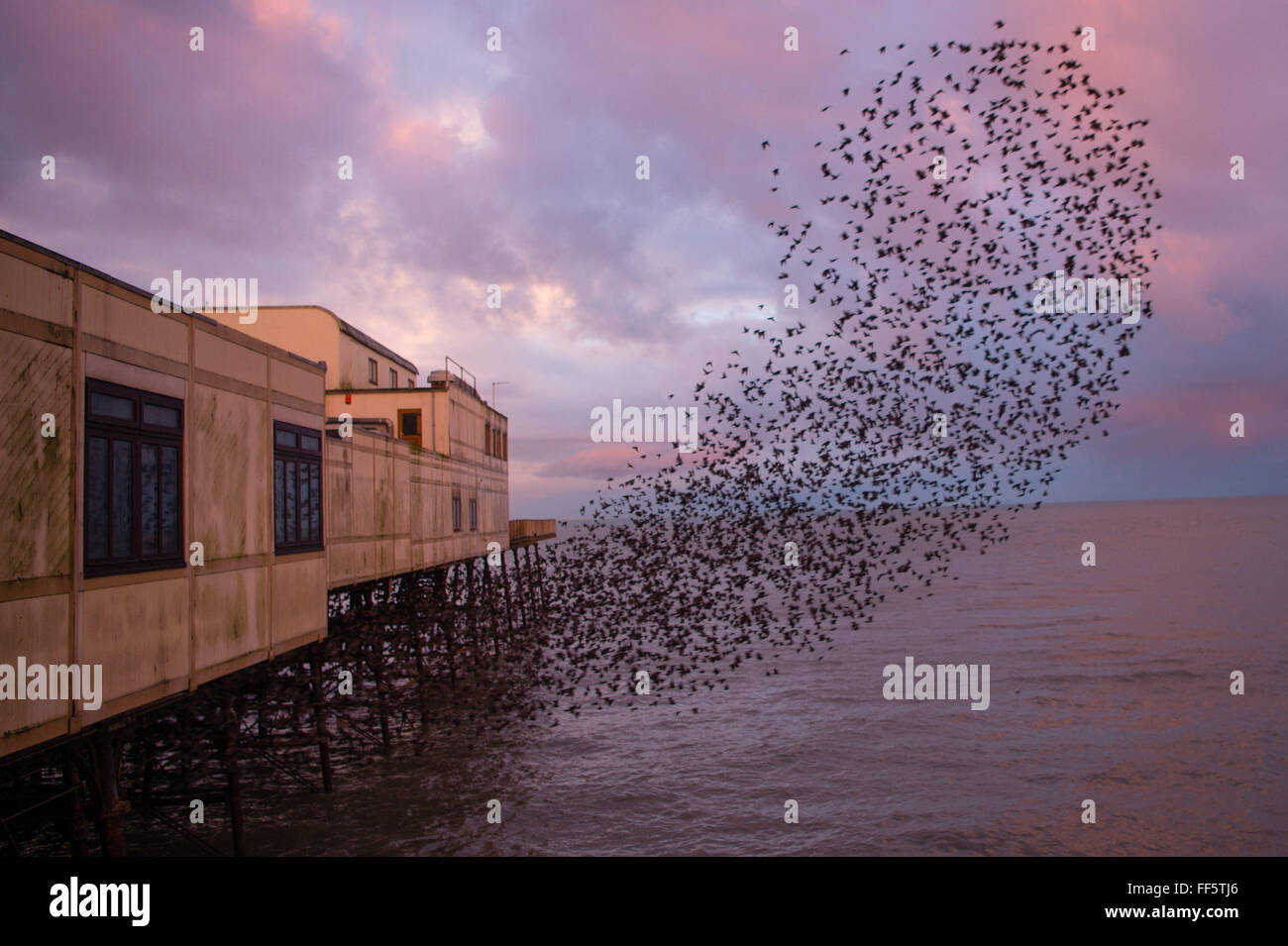 Aberystwyth, Wales, UK. 11th February, 2016.  UK Weather - At first light on a cold February morning, tens of thousands Stock Photo