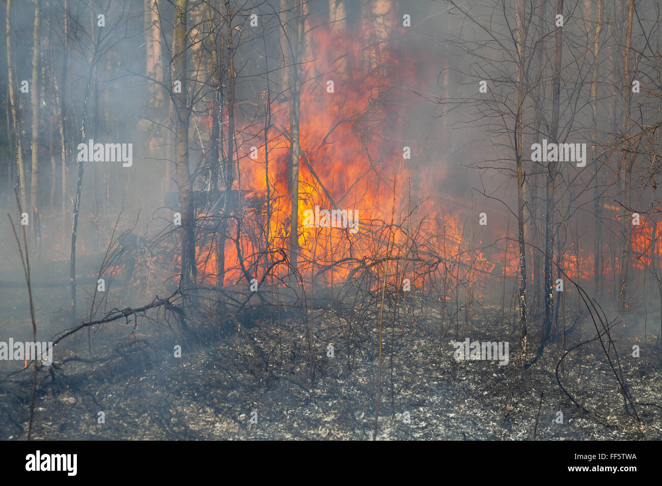 Wildfire - Stock Image