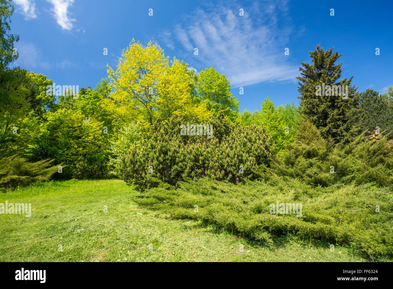 Garden Design Bushes Stock Photos & Garden Design Bushes Stock ... on
