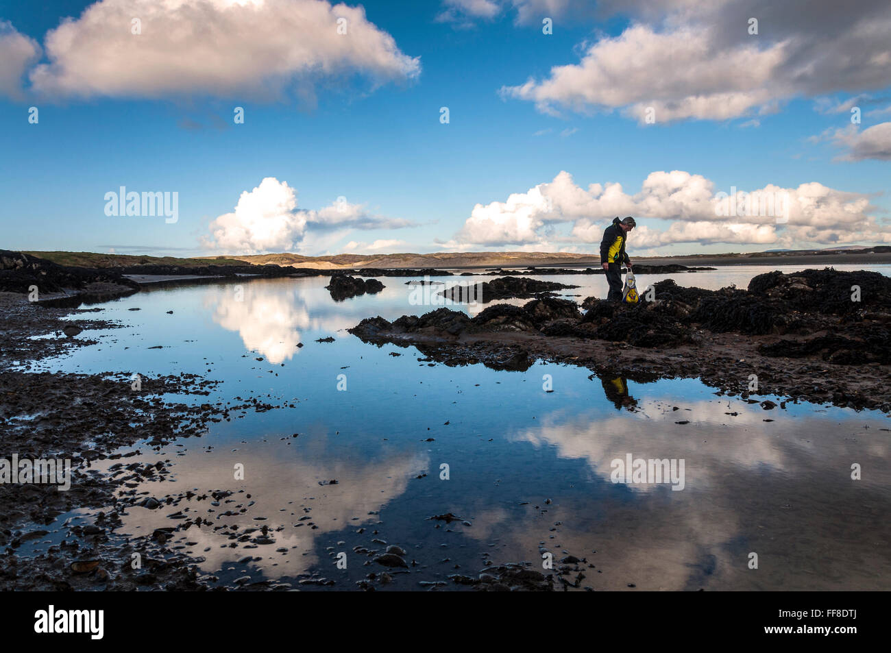 Ardara, County Donegal, Ireland. February 11th 2016. A man collects mussels on a calm day on Ireland's west - Stock Image