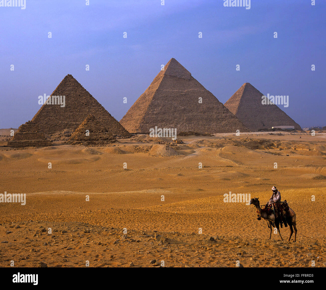 Camel and pyramids, Giza plateau, Cairo, Egypt, Africa - Stock Image