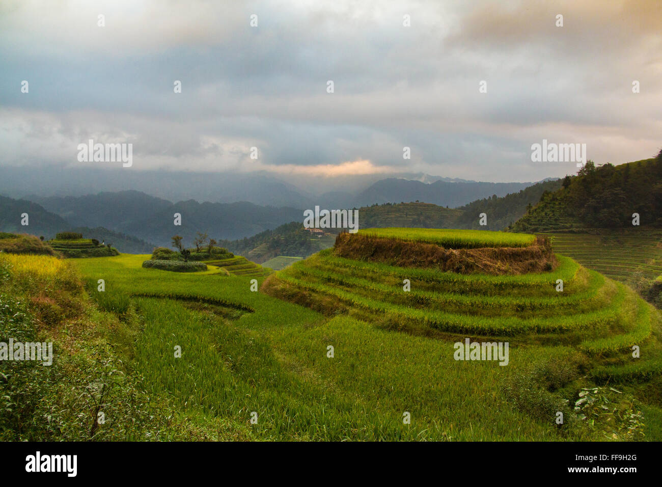 Dragon Backbone Rice Terraces. Guilin. China - Stock Image