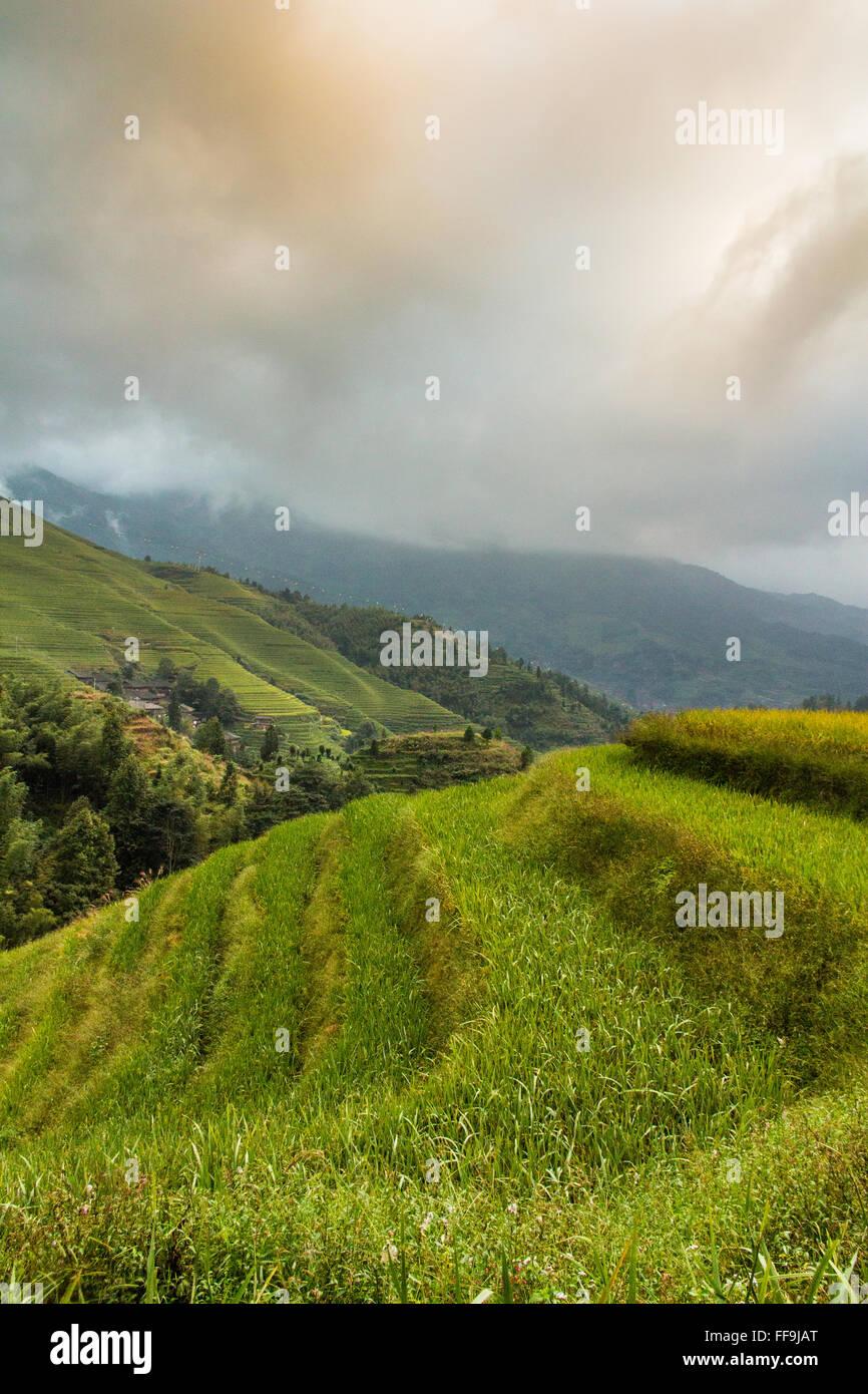 Dragon Backbone Rice Terraces. Guilin. China - Stock Image