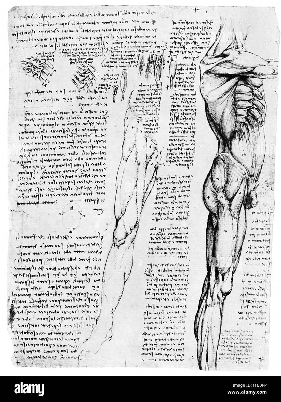 Großzügig Anatomie Leonardo Da Vinci Galerie - Anatomie Ideen ...