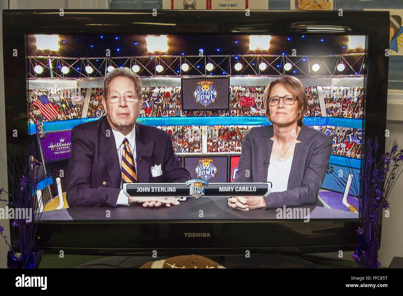 Wantagh, New York, USA. 7th Feb, 2016. Sports commentators JOHN STERLING and MARY CARILLO give play-by-play commentary - Stock Image