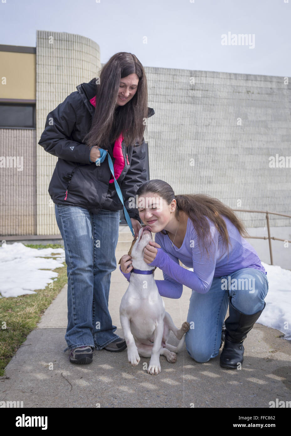 Wantagh, New York, USA. 7th Feb, 2016. EMILY smiles as Halley the beagle licks her on the face, as the teen and - Stock Image
