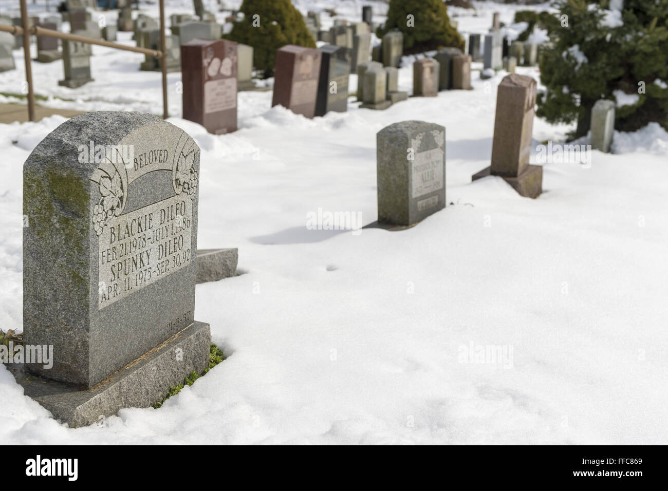 Wantagh, New York, USA. 7th Feb, 2016. President Nixon's famous dog Checkers, the cocker spaniel, is buried - Stock Image