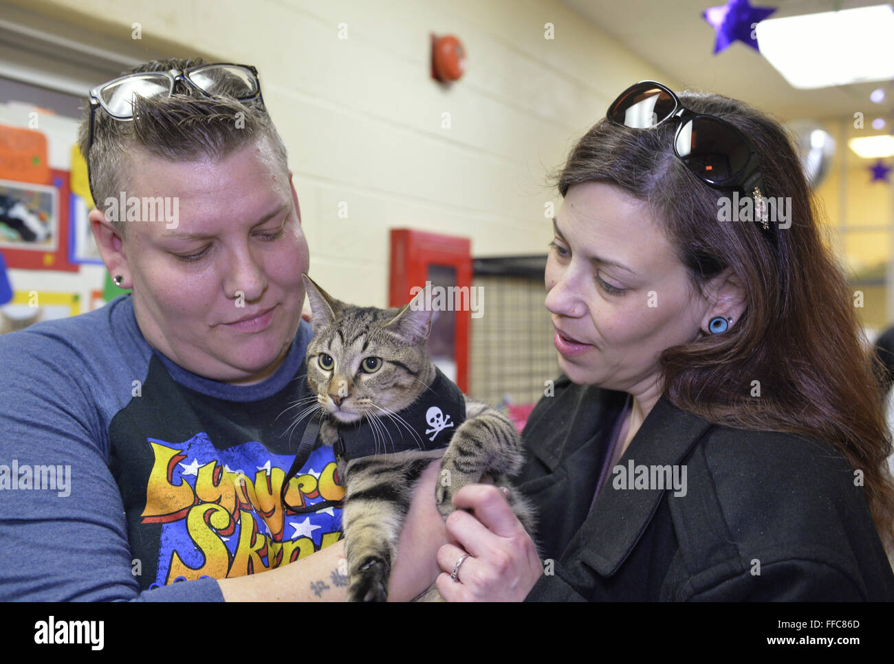 Wantagh, New York, USA. 7th Feb, 2016. Tiger the tabby cat, who was one of the team players in the Hallmark Channel - Stock Image
