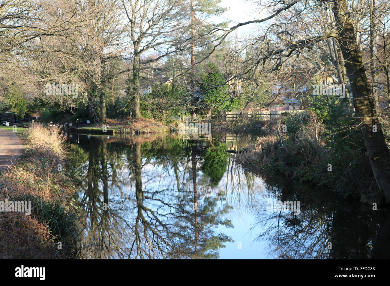 The Basingstoke Canal near Brookwood, Woking, Surrey. - Stock Image