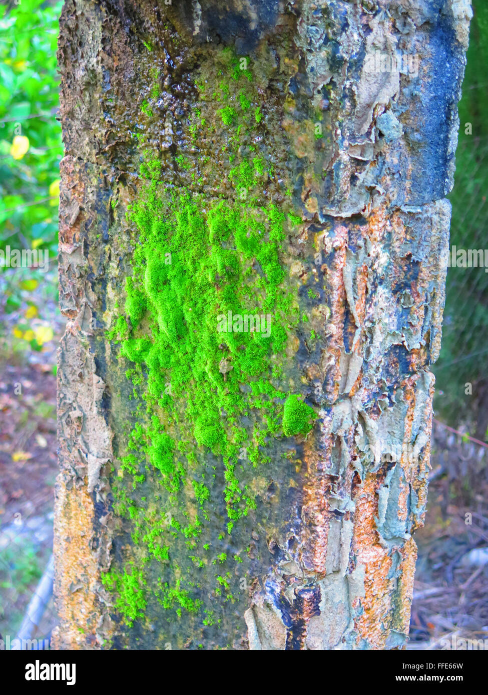 Moss growing on concrete pillar supporting irrigation canal - Stock Image