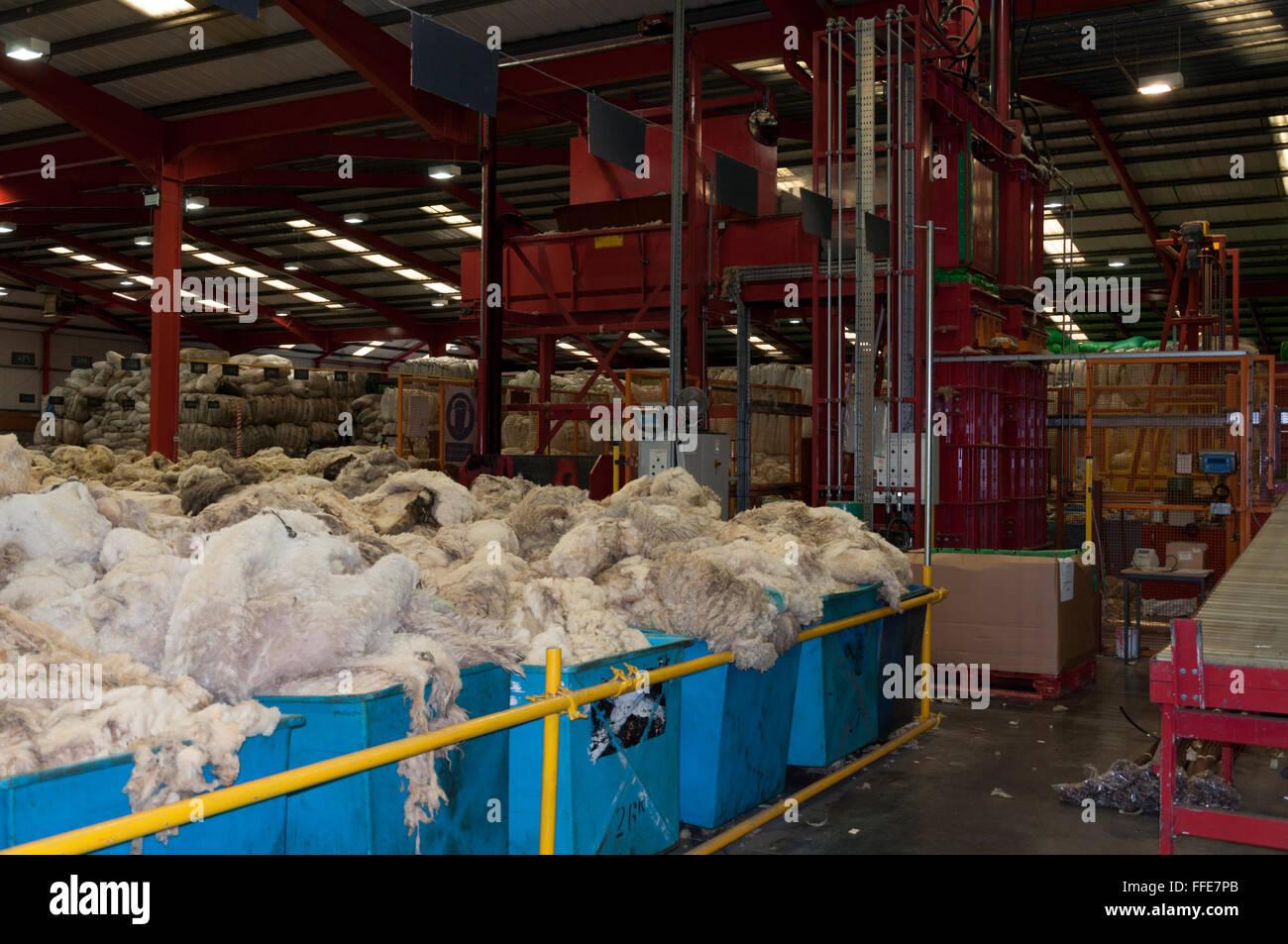 Sorted wool waiting to get baled at British Wool in Bradford UK - Stock Image