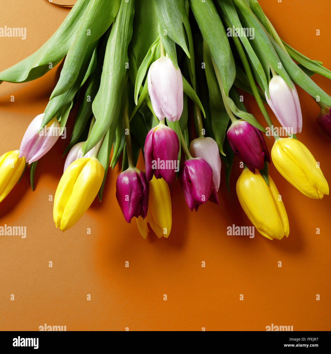 fresh spring bouquet, tulips - Stock Image