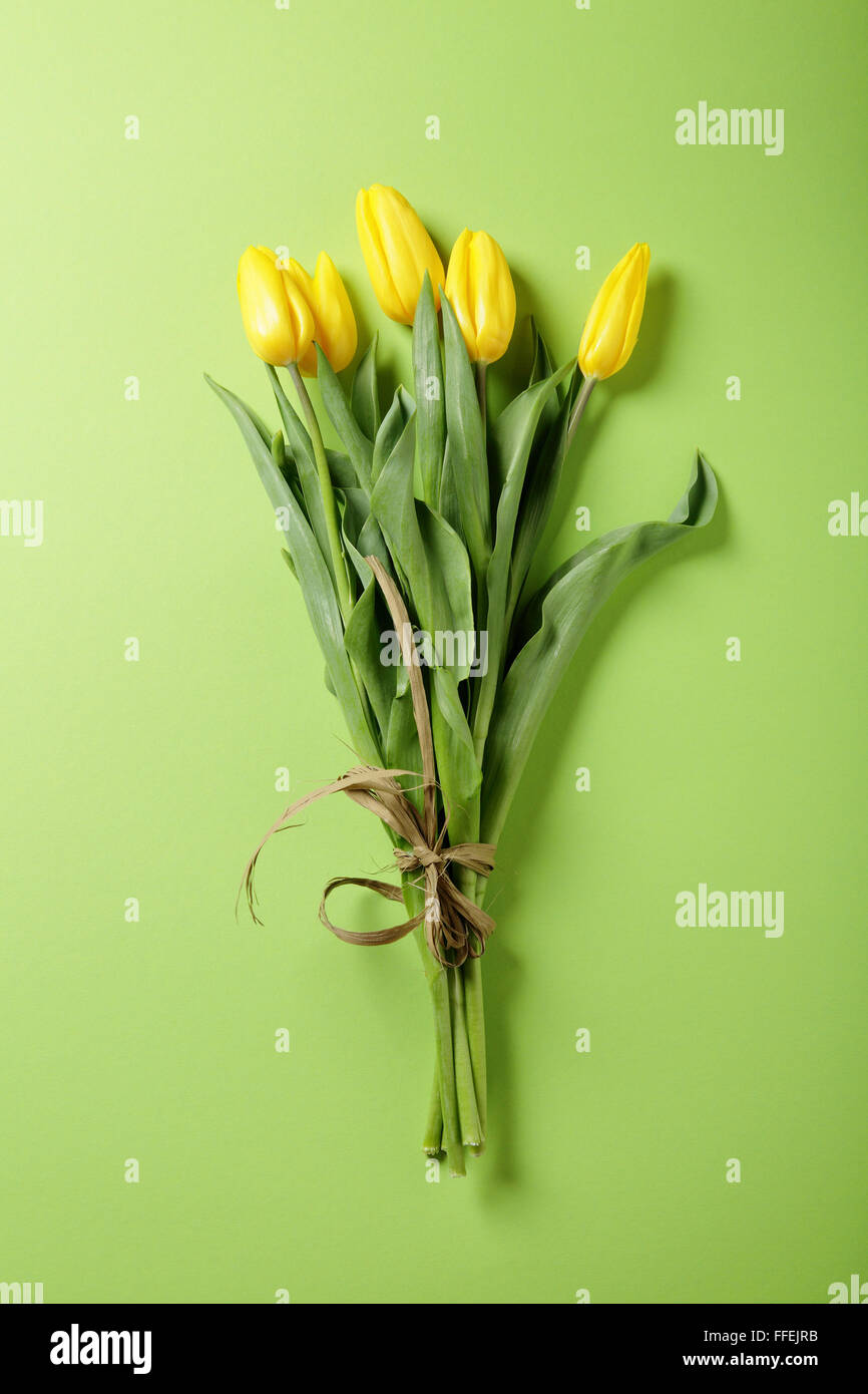 fresh yellow tulip on green background, flowers - Stock Image