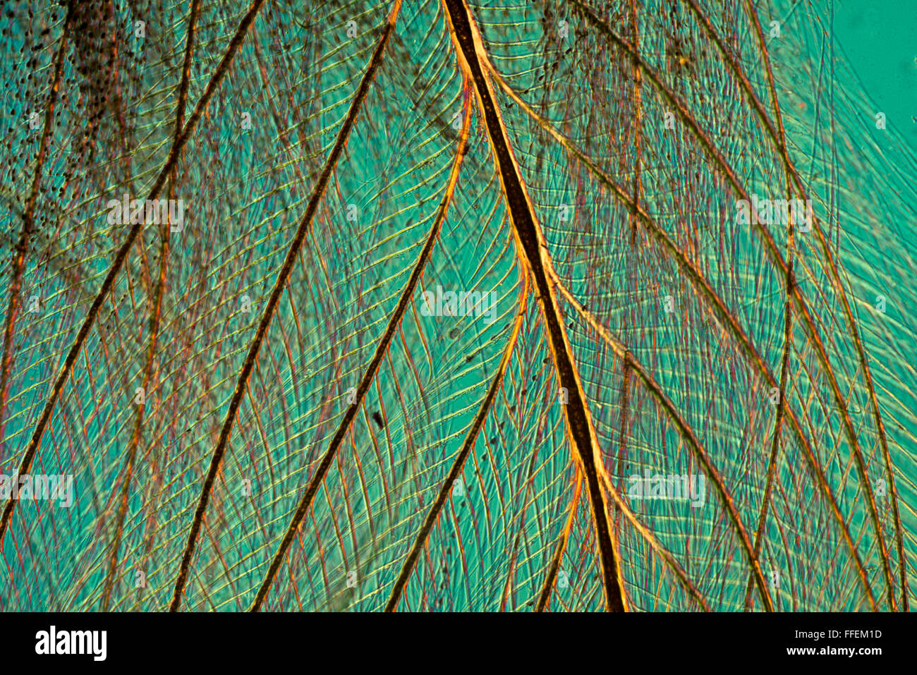 Microscopic image - Stock Image