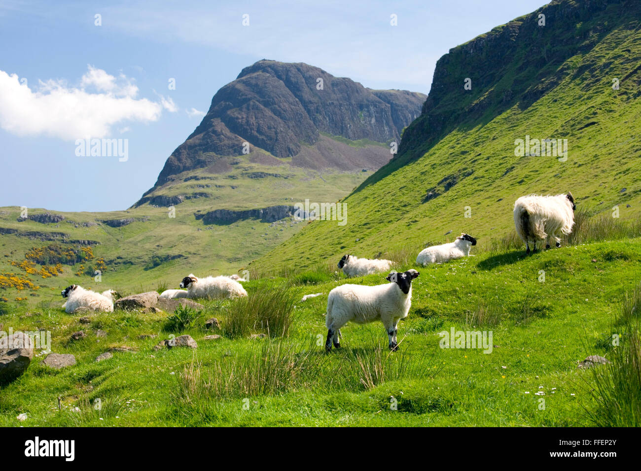 Carbost, Isle of Skye, Highland, Scotland. View along the Talisker Valley to the peak of Preshal More, sheep in foreground. Stock Photo