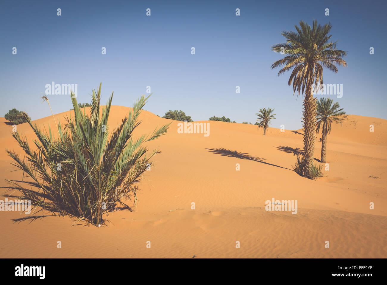 Palm tree in Erg Chebbi, at the western edge of the Sahara Desert - Stock Image