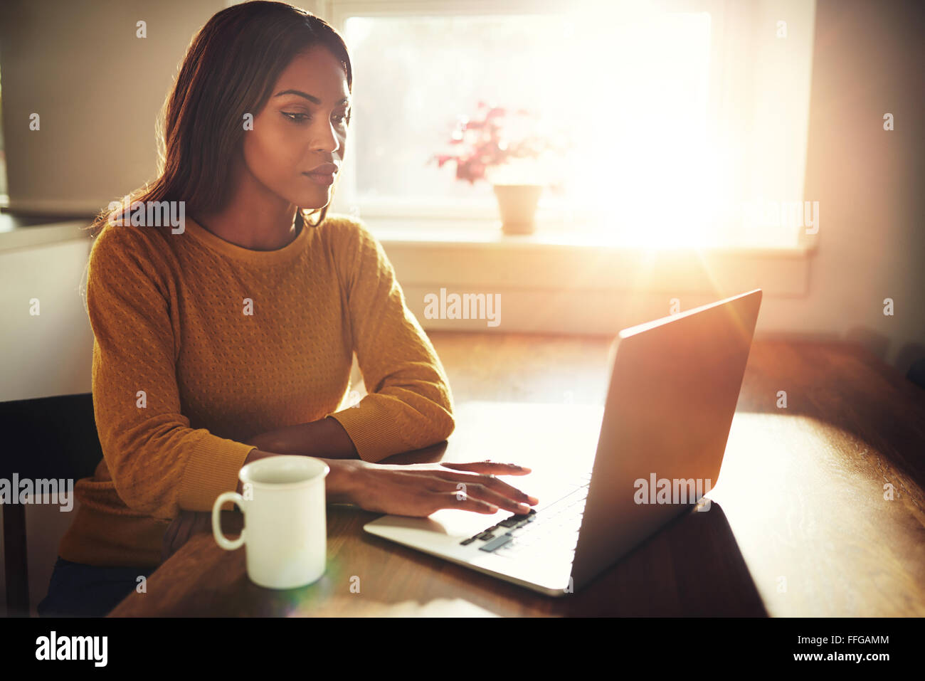 Gorgeous black single female sitting at table with cup and typing on laptop with bright sun coming through window - Stock Image