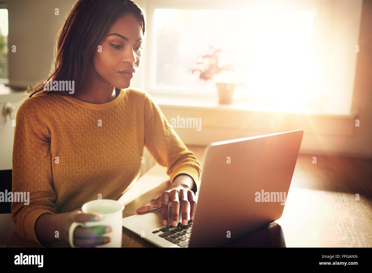 Serious Black adult single female sitting at table holding coffee cup and typing on laptop with light flare coming - Stock Image