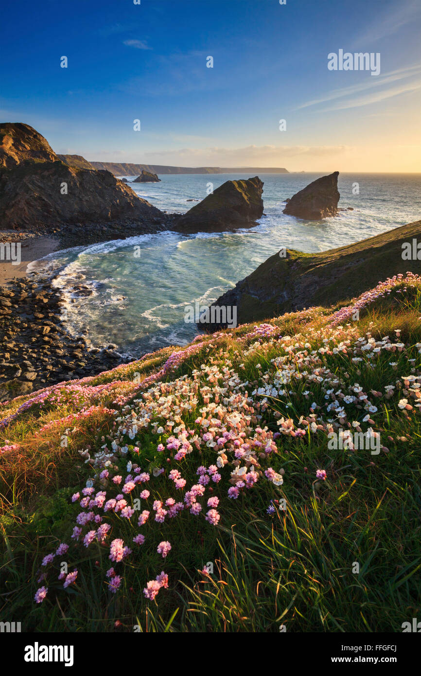 Samphire Island near Portreath on the North Coast of Cornwall, captured from the coast path, shortly before sunset - Stock Image