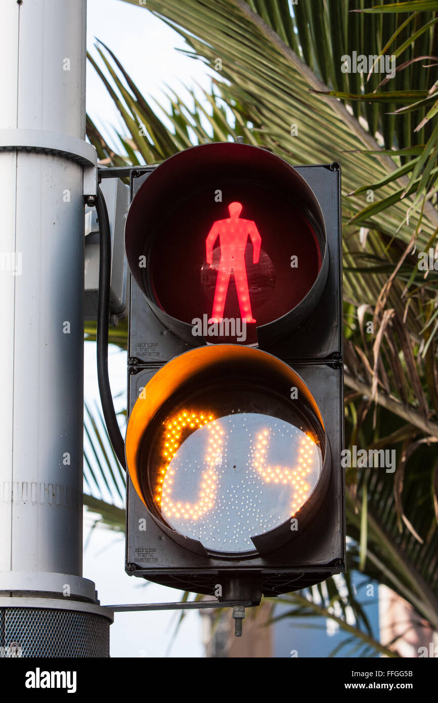 Countdown timer on pedestrian crossing,traffic,light,lights, in Auckland,New Zealand - Stock Image
