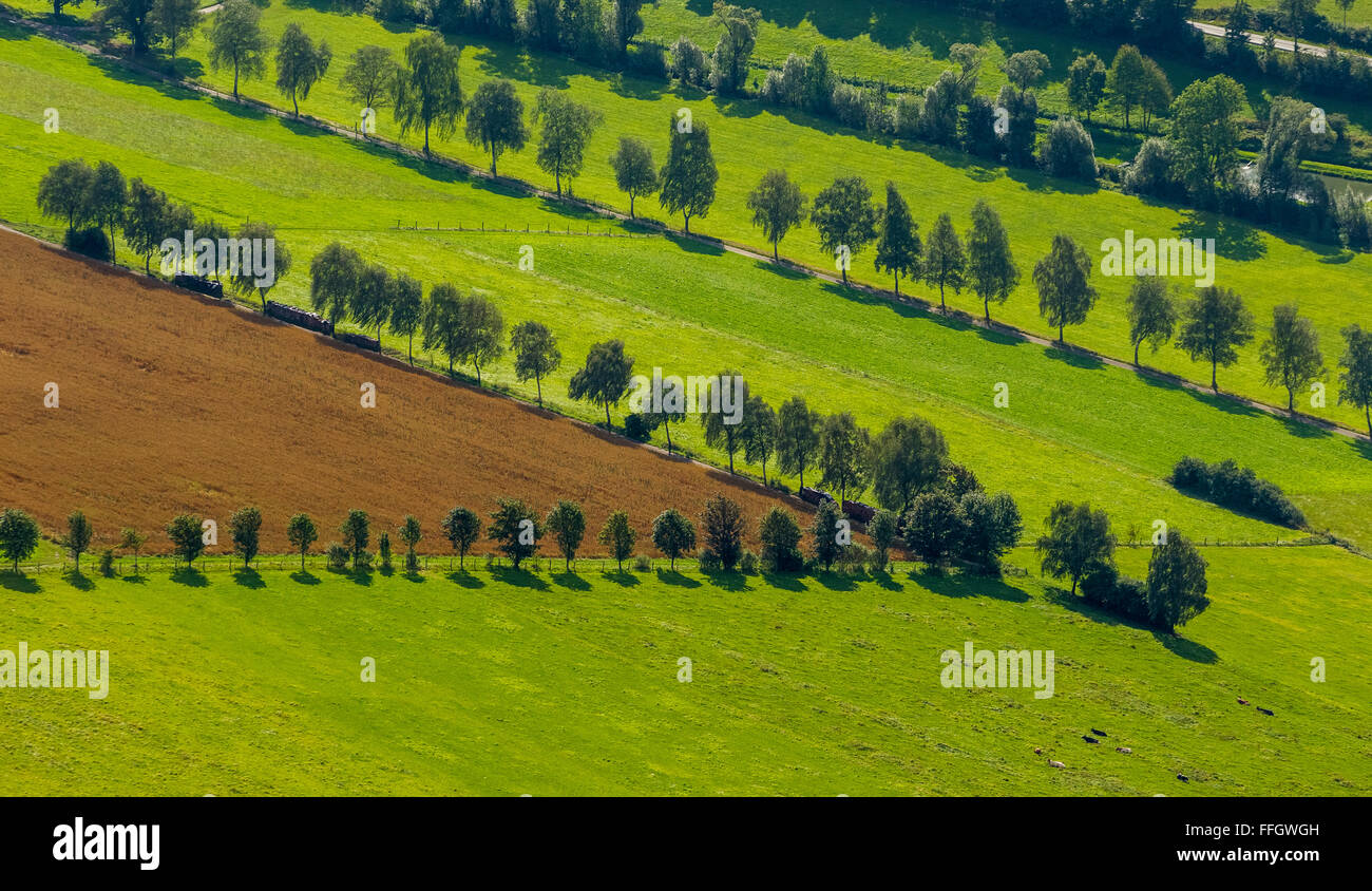 Aerial view, fruit trees and pastures in Schmallenberg, Schmallenberg, Sauerland, North Rhine-Westphalia, Germany, - Stock Image