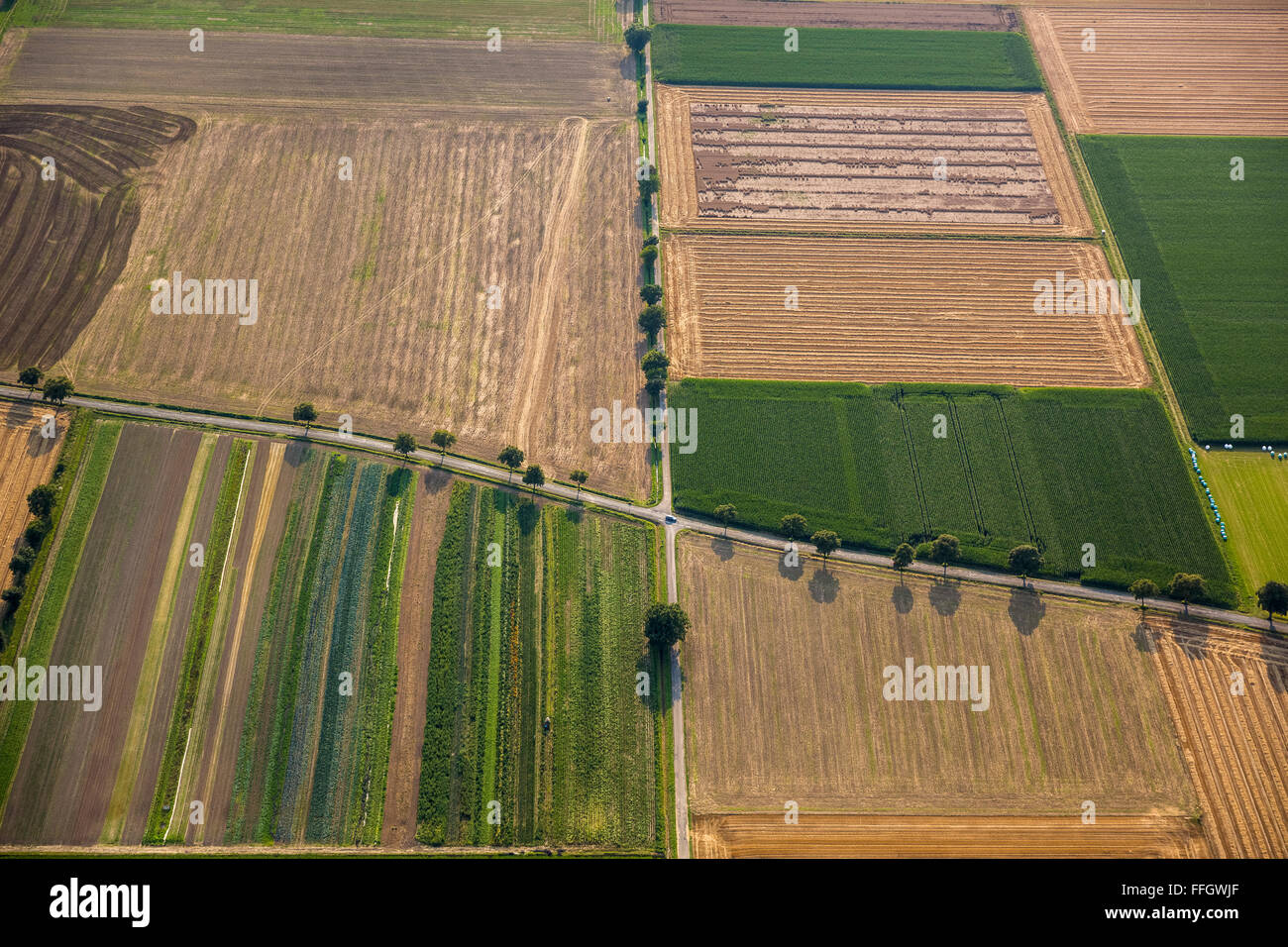 Aerial view, cruising the country roads, fields, alleys, Backlit, inheritance, crop rotation, Welver, Soester Plain, - Stock Image