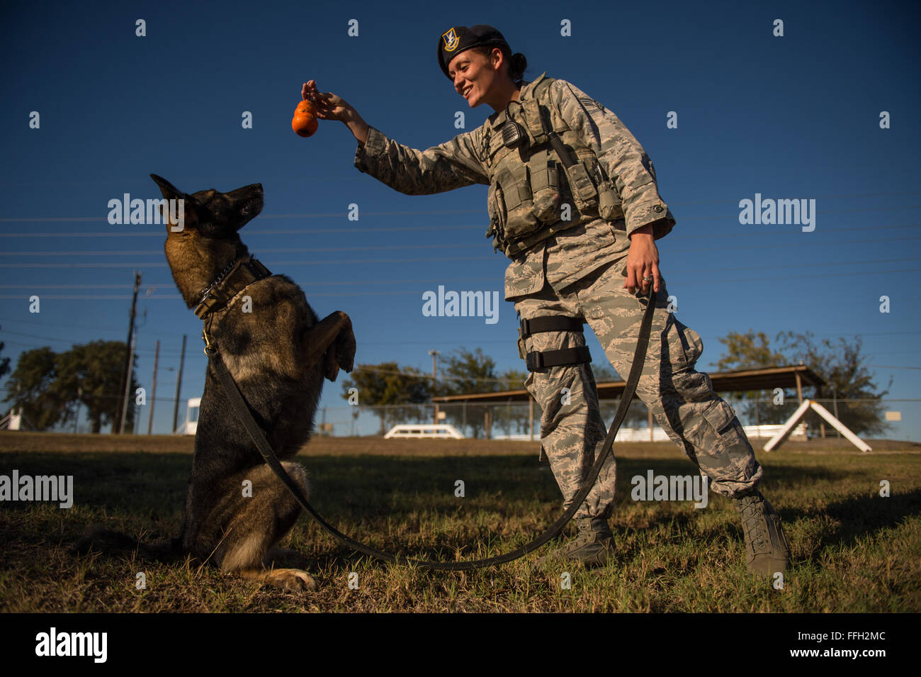 Senior Airman Chelsea LaFever gestures for ZZusa to 'sit pretty' during training at Joint Base San Antonio - Stock Image